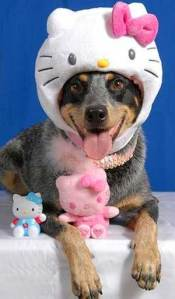 hello-kitty-hat dog