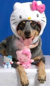 hello-kitty-hat dog